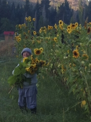 Abby & sunflowers