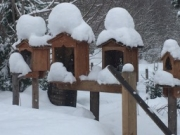 Snow on shrines